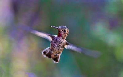 Home Offices and Hummingbirds